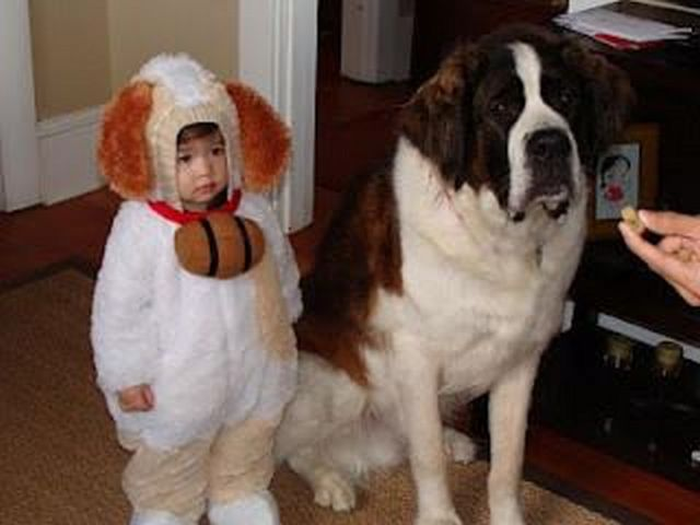 Cute Baby Animal Costumes 49 Fashion Best